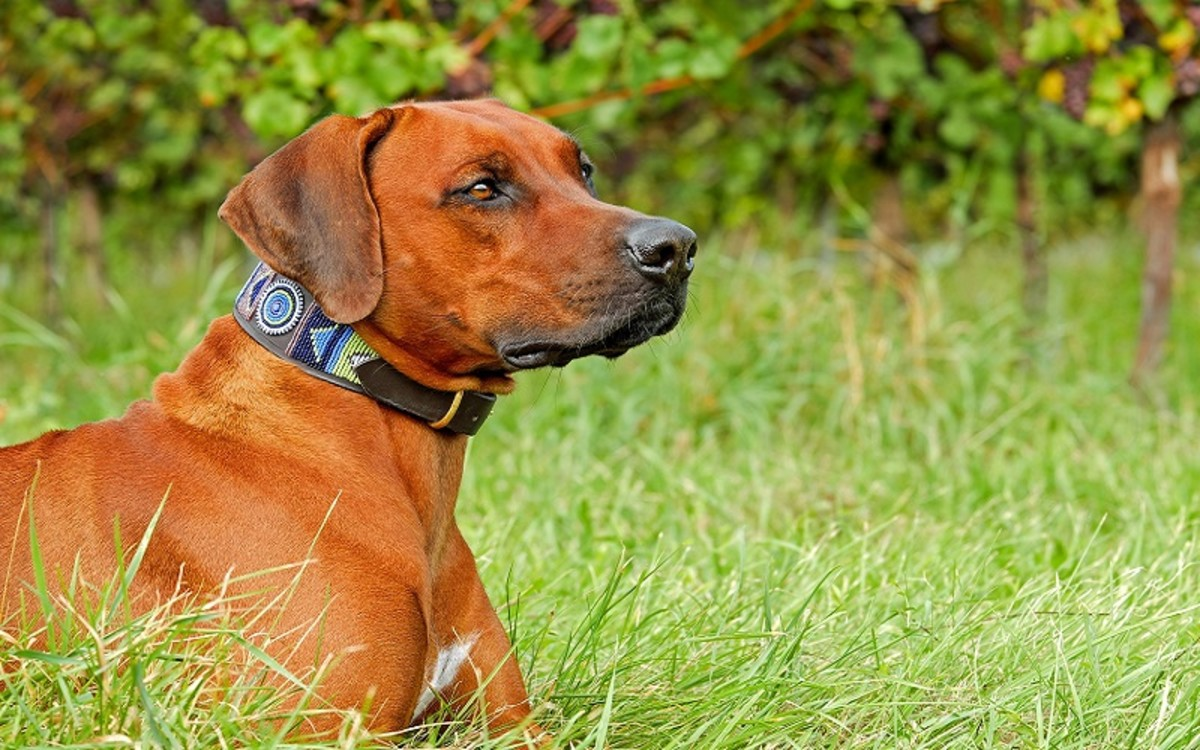 Dog's Acid Reflux Worse is at Night