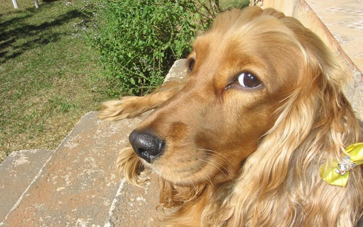 Slippery Elm for Dog Diarrhea