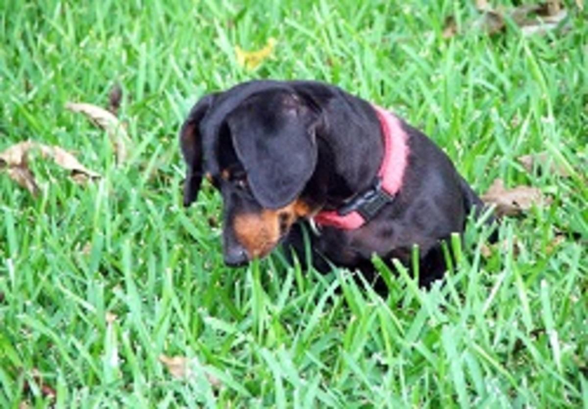 Dog's Upset Stomach Symptoms