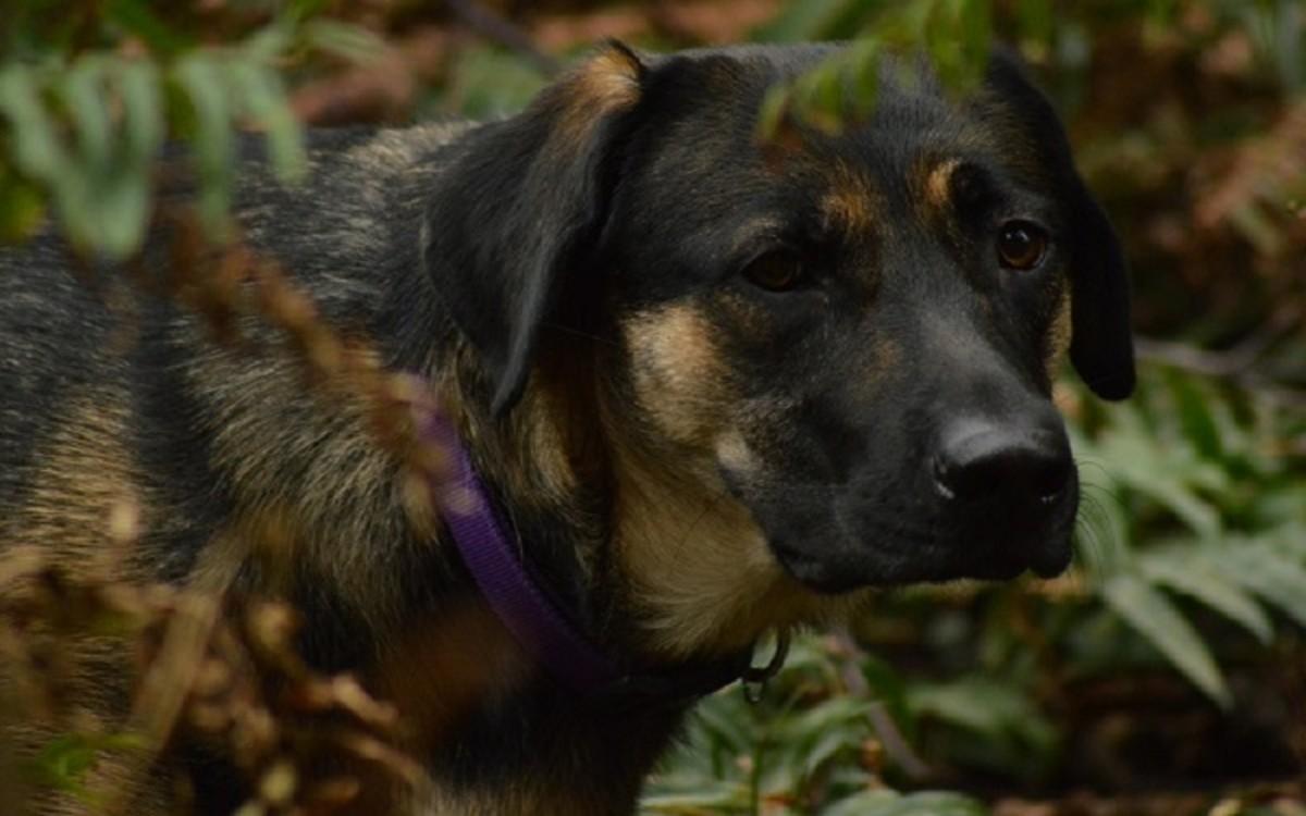 Dog Irritable Bowel Syndrome