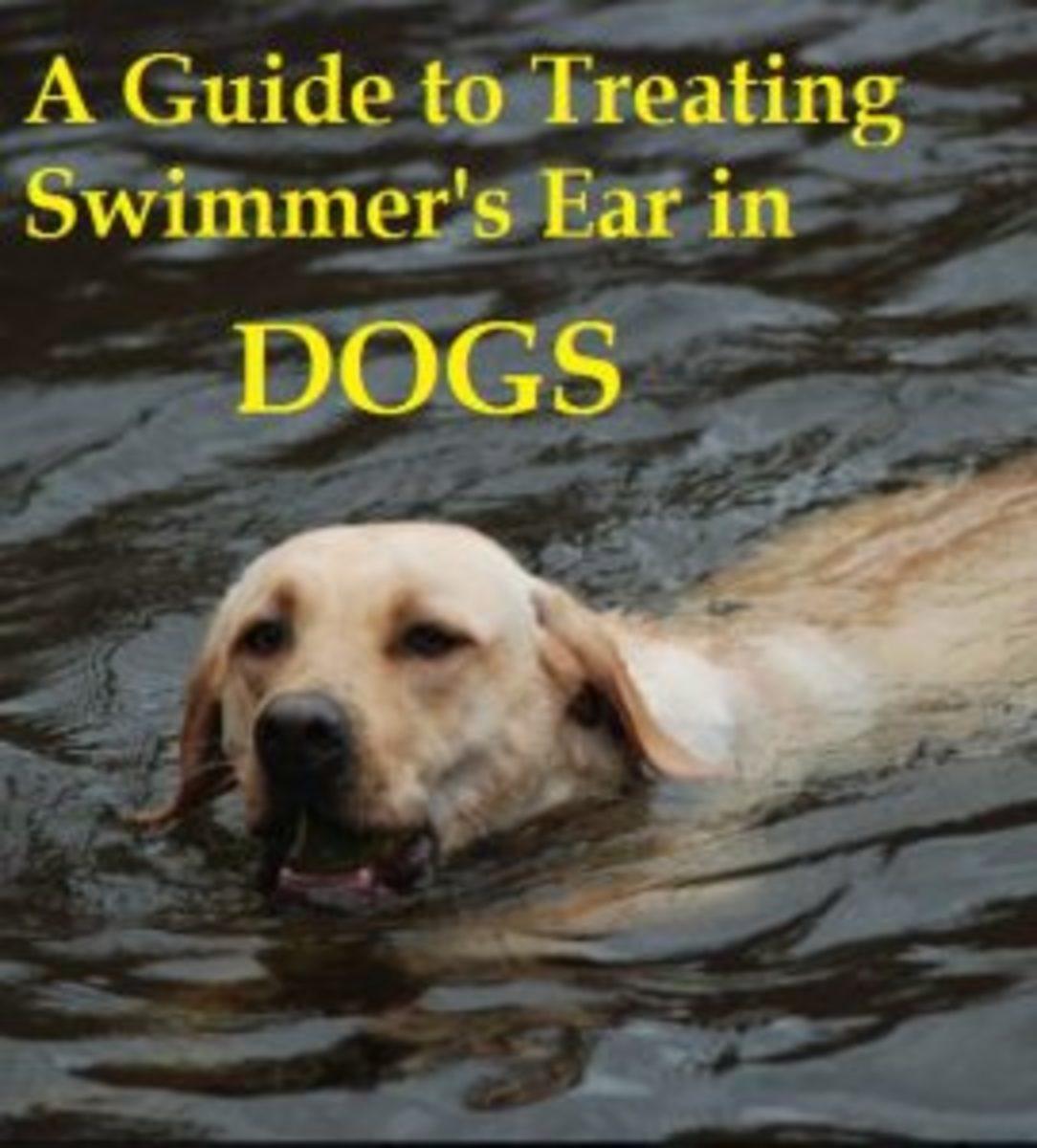 Treat dog swimmer's ear