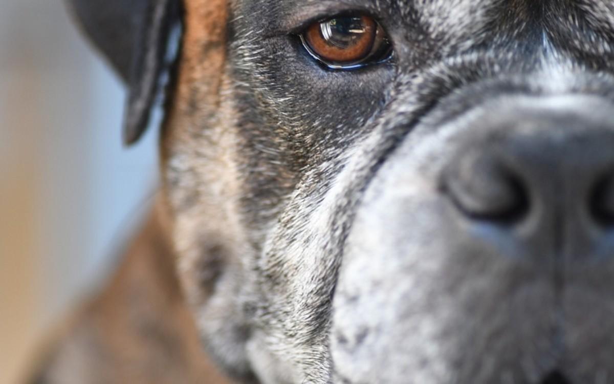 Aspirin for Dogs
