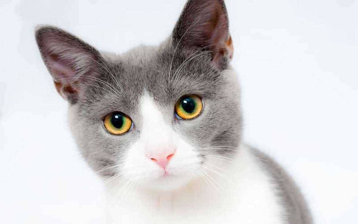 Dehydration in Cats