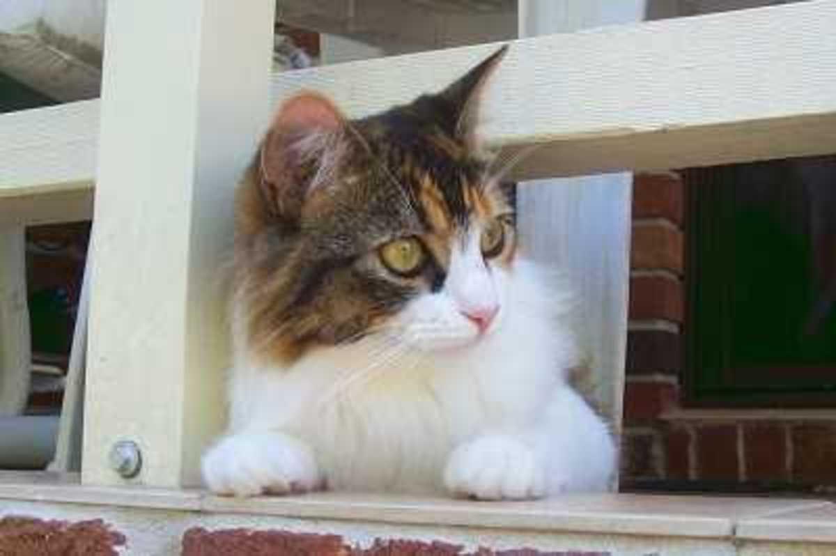 Cat Escaping