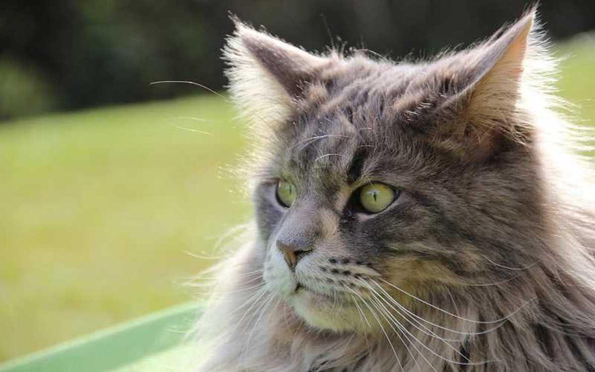 Cat Afraid of Guests