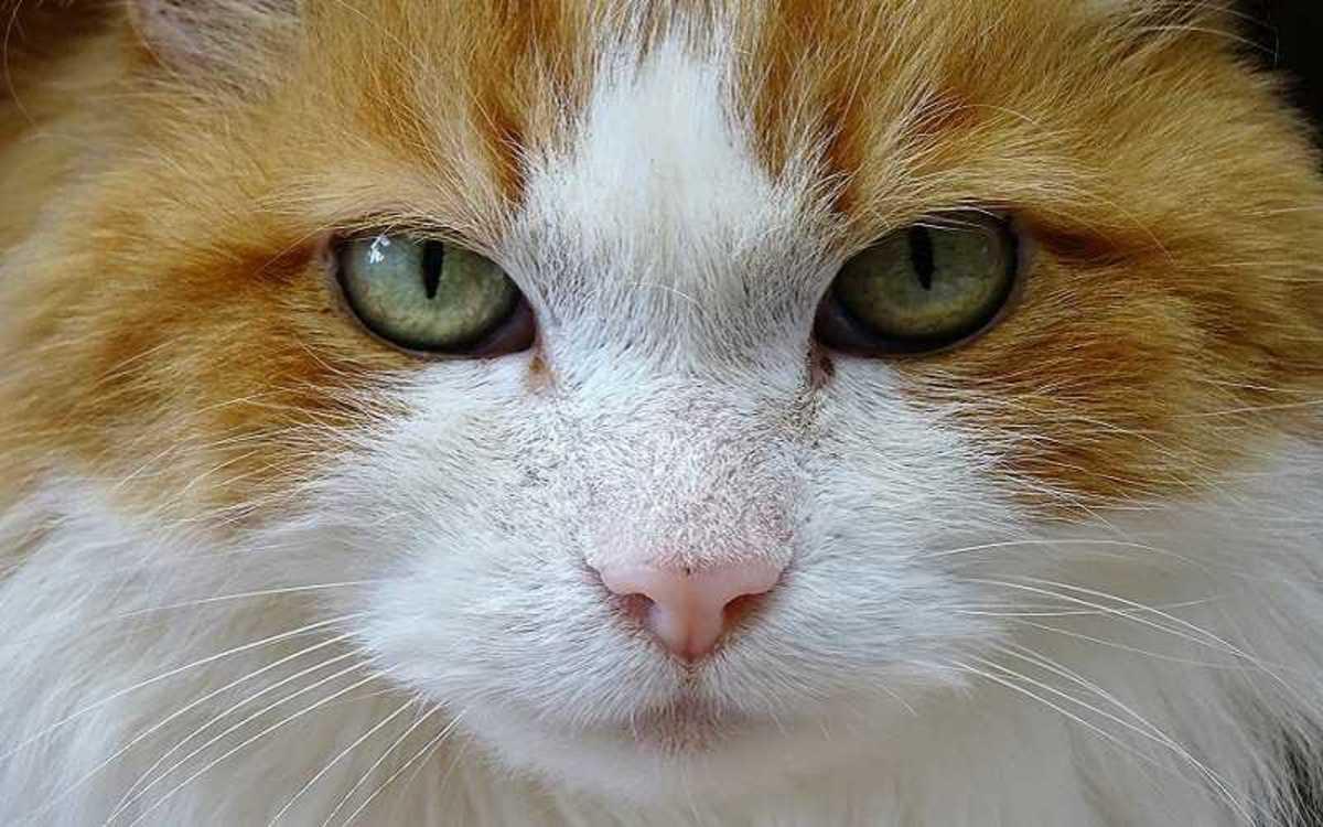 Cat Afraid Of Vet