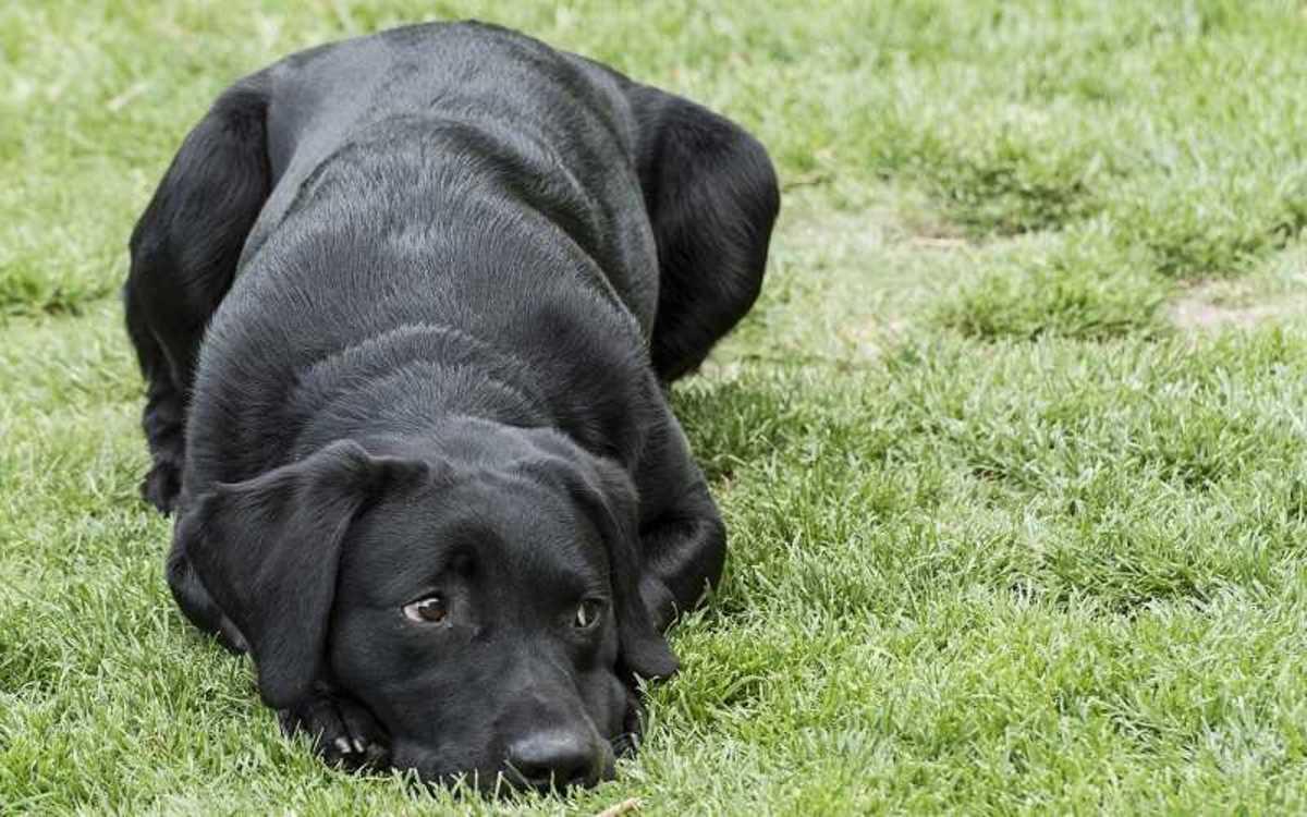 Disobedient Dog