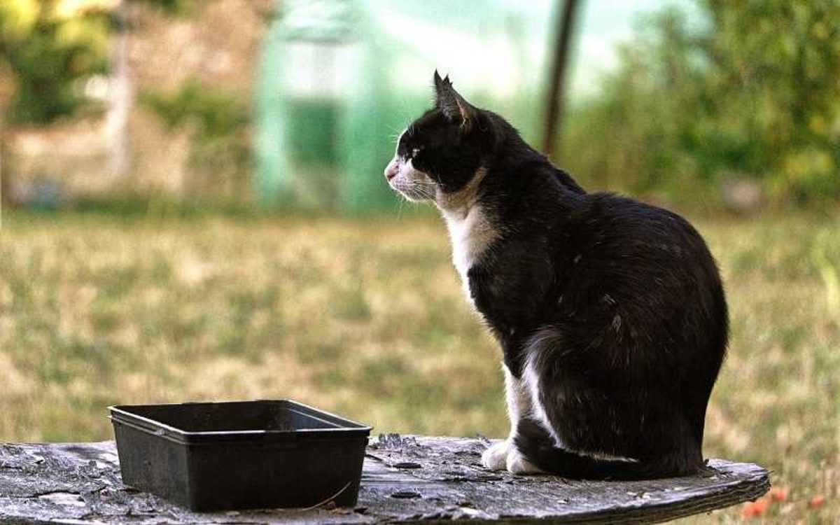 Cat with Urinary Tract Infections