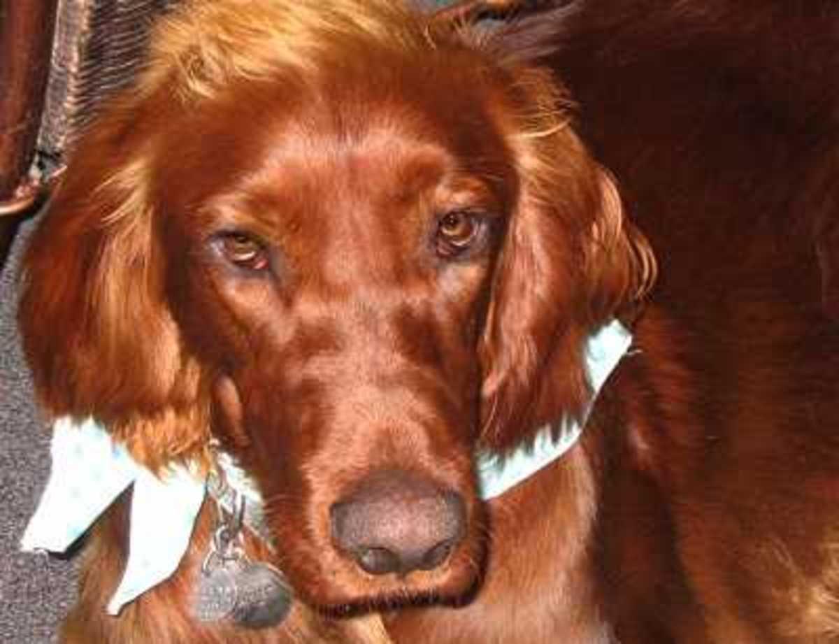 Dog Sinus Problems