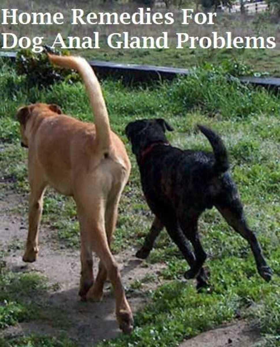 Dog anal gland