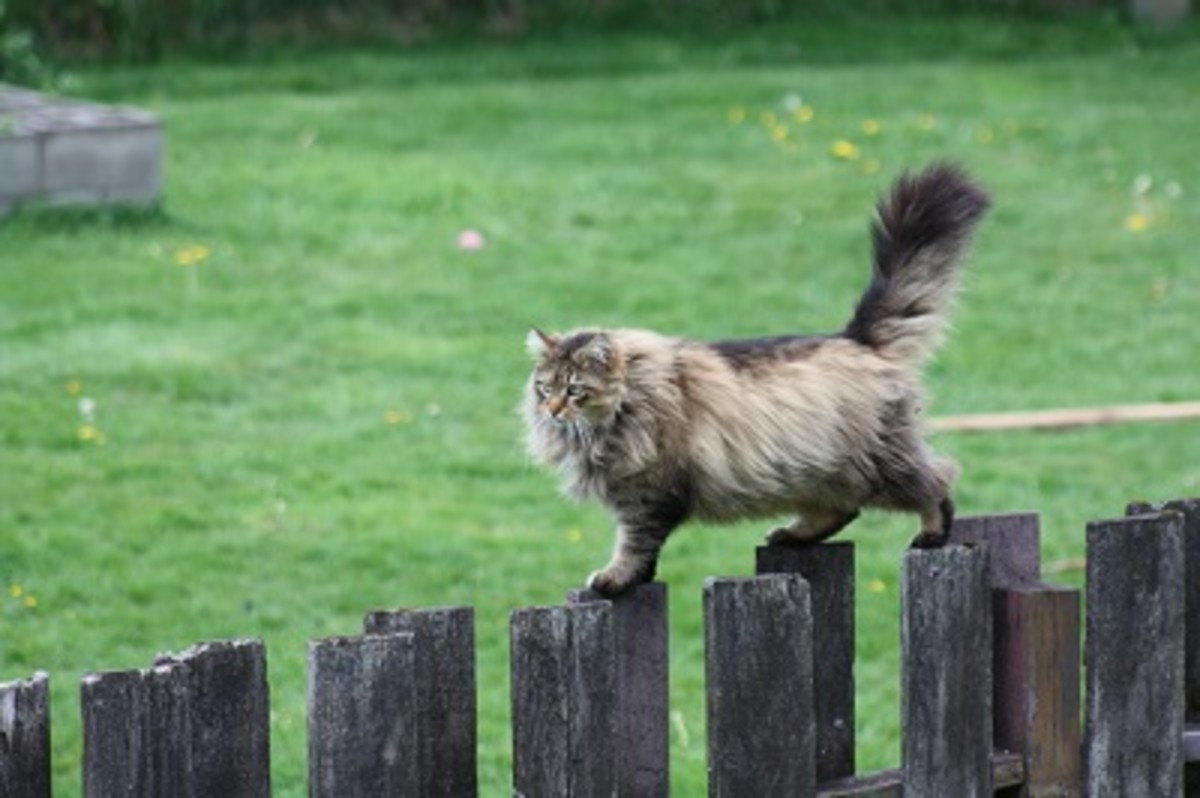 Home Remedies for Cat Matted Fur