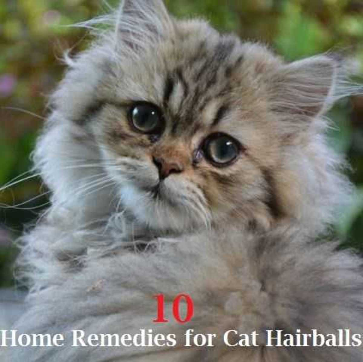 remedies for cat hairballs   best pet home remedies