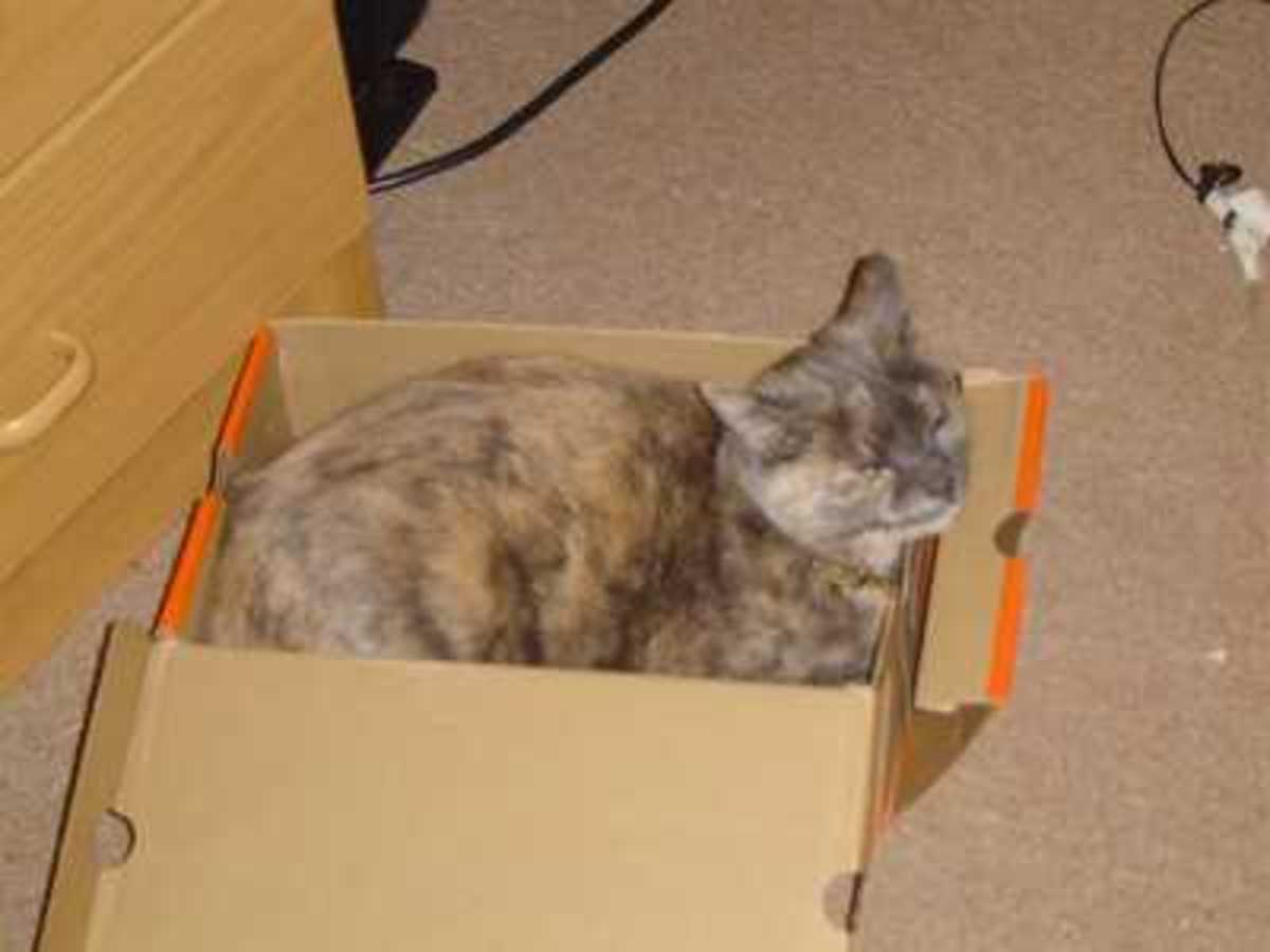 Cat Litter Box Training