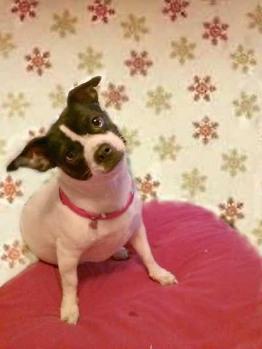 Home remedies for dog flatulence