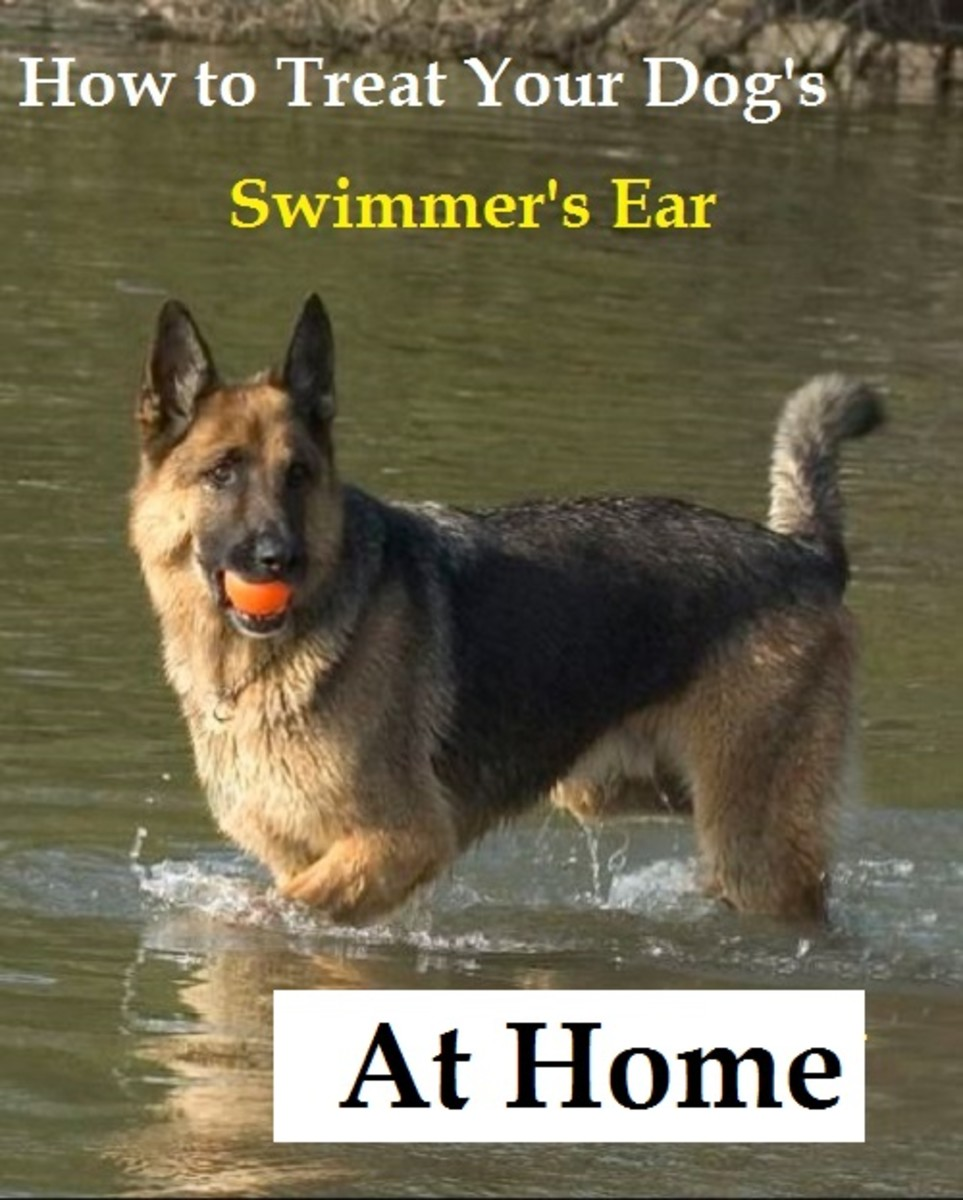 dog swimmer's ear natural remedies
