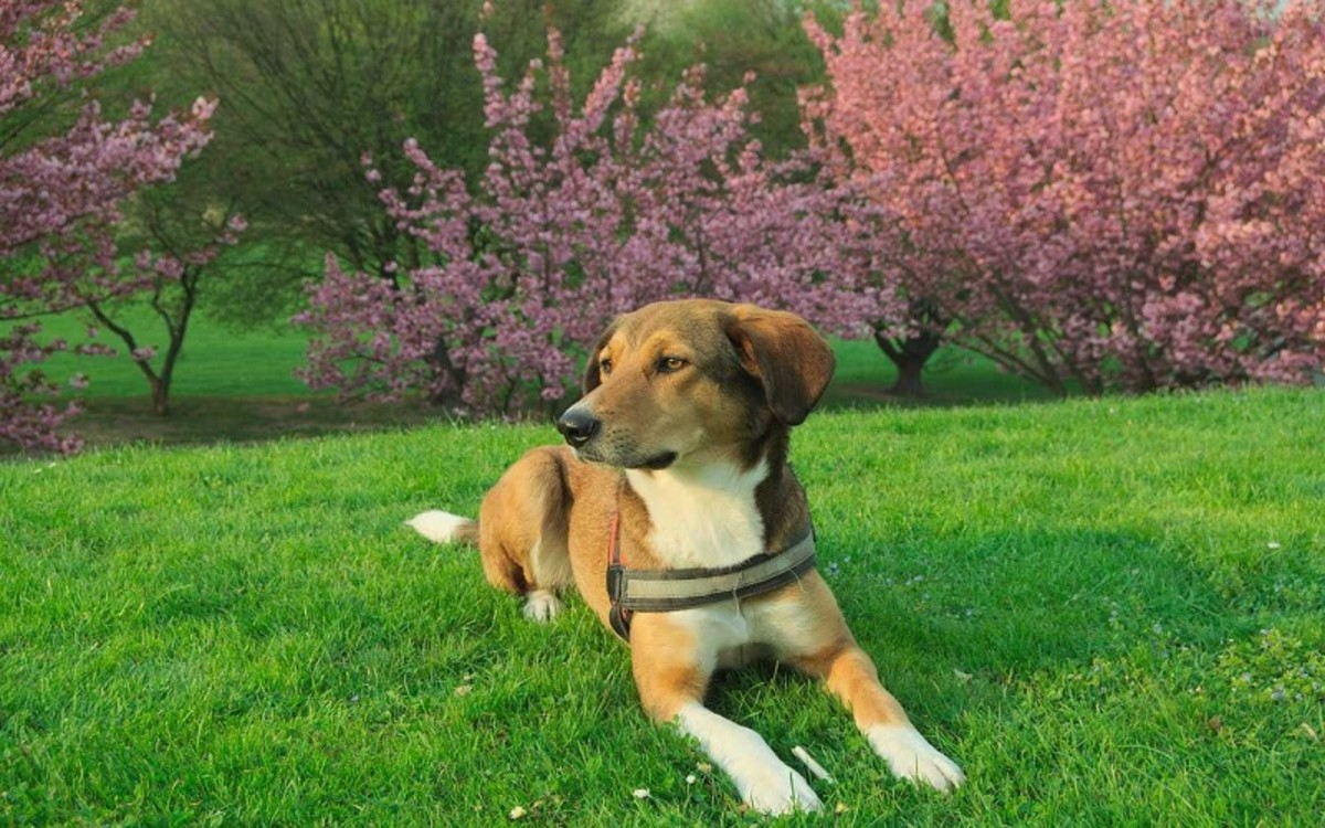 Hypoglycemia in Hunting Dogs
