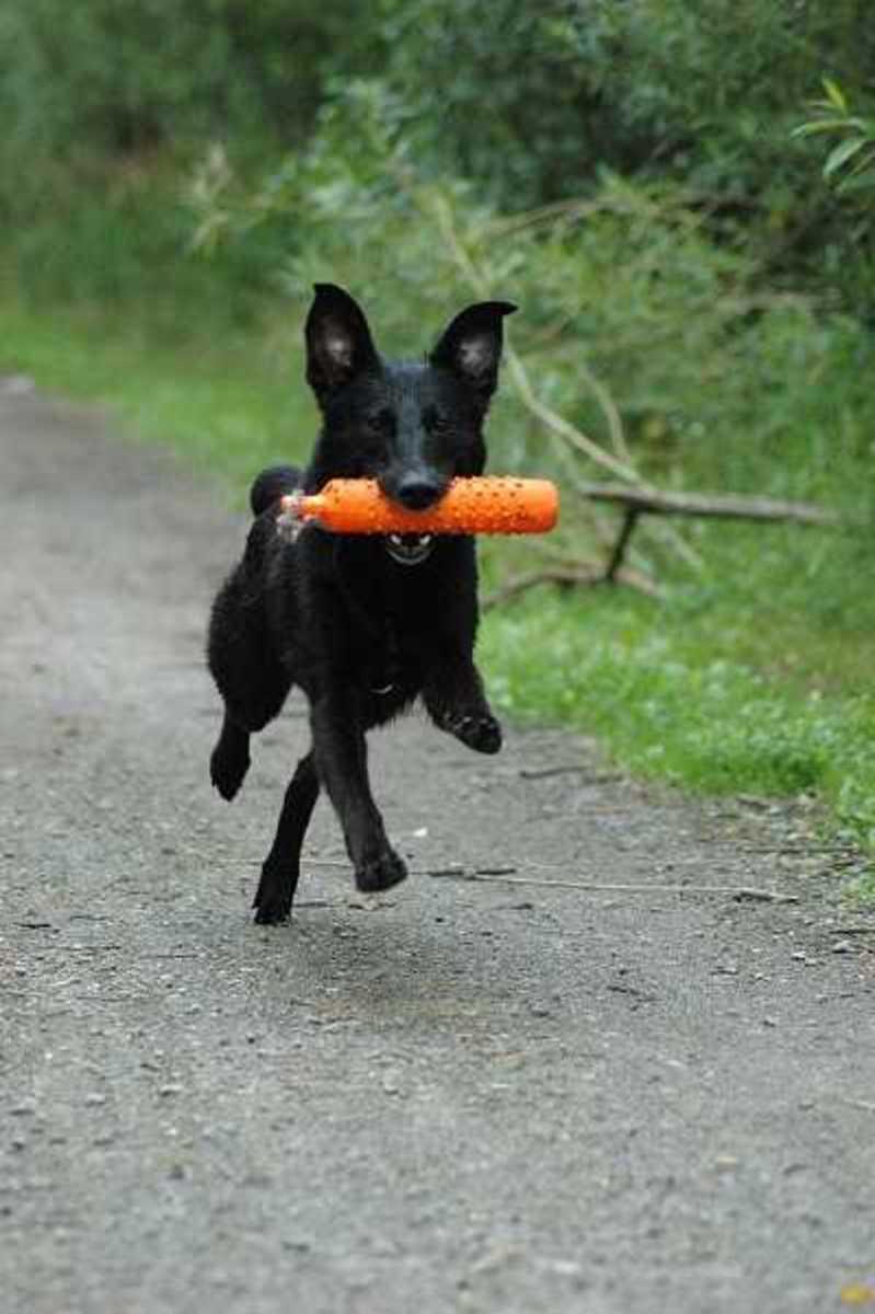 Dog Hyperactivity
