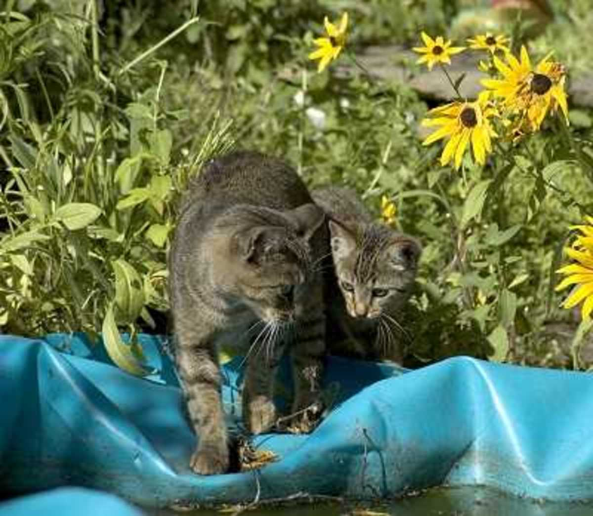 Cat Afraid of Water