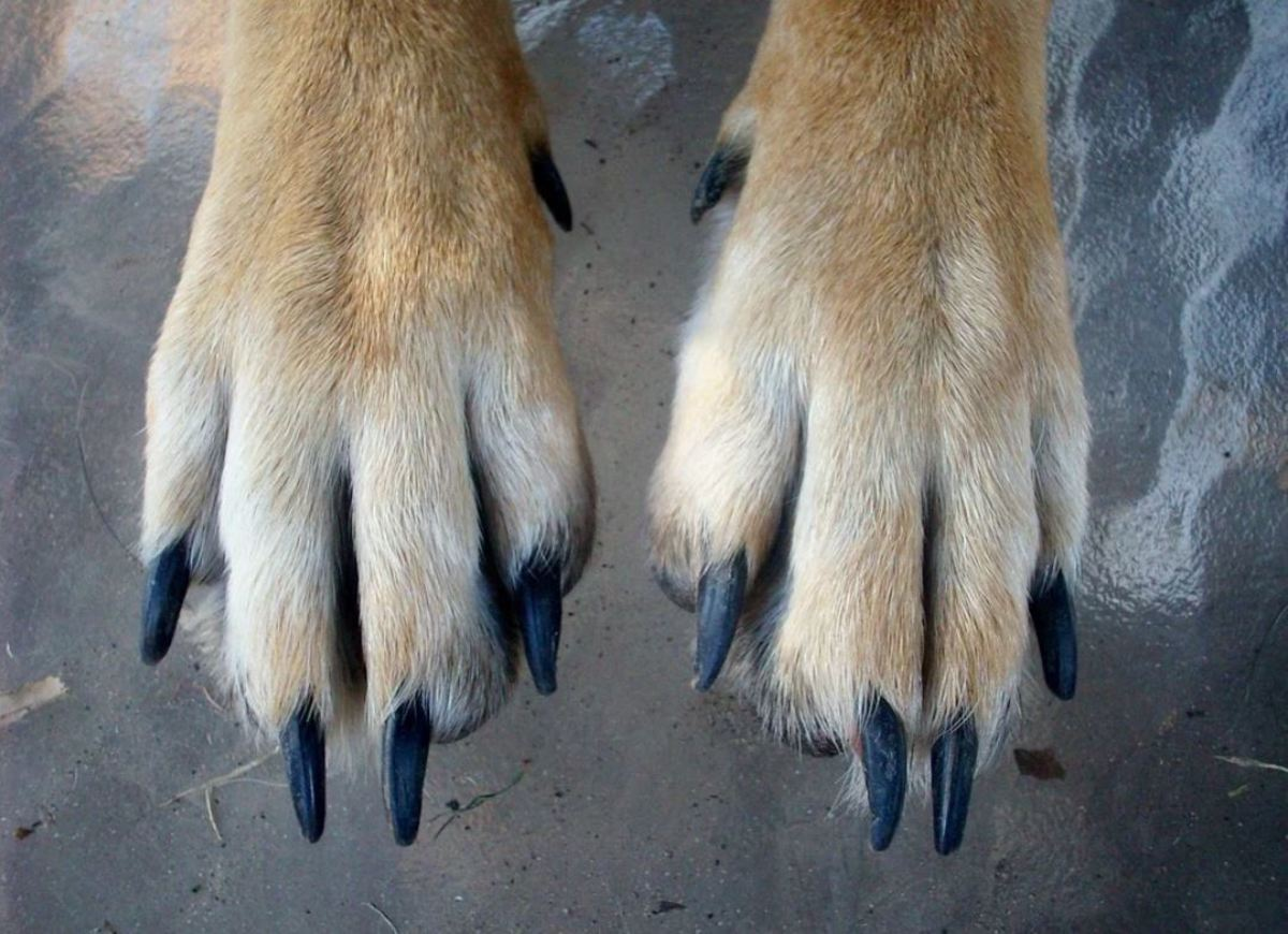 Many dogs hate having their paws touched.