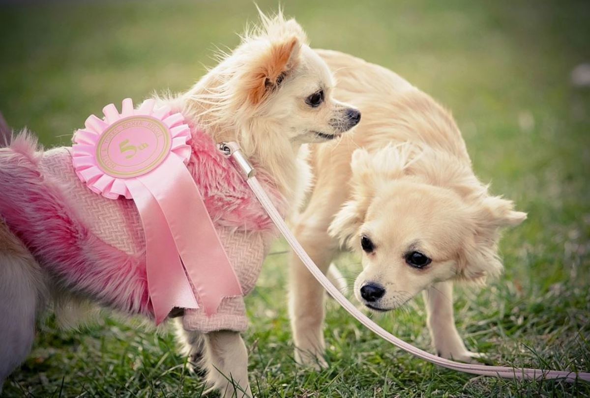 Female dogs are expected to be actively bleeding for about about 9 days.