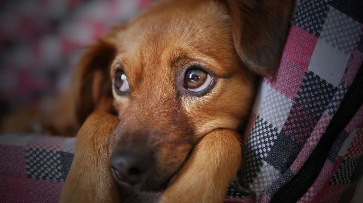 Do puppies feel sorry or some level of empathy after biting us?