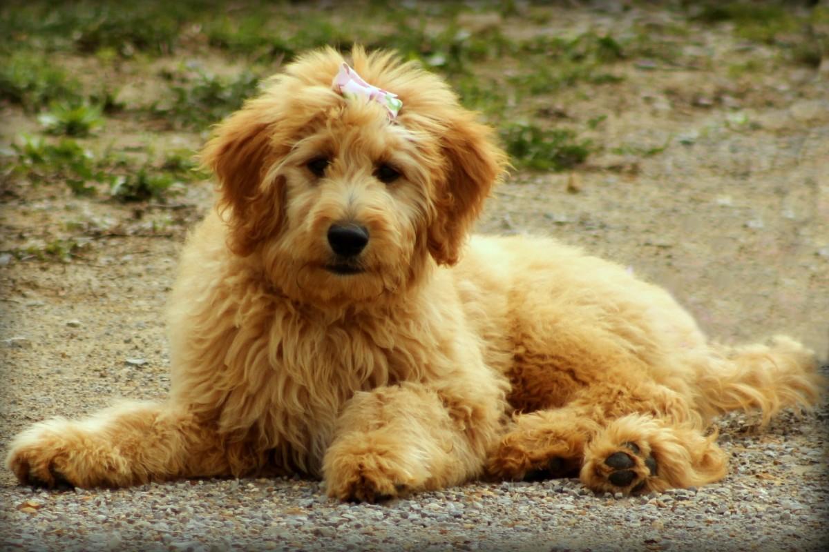 Dog or teddy bear?