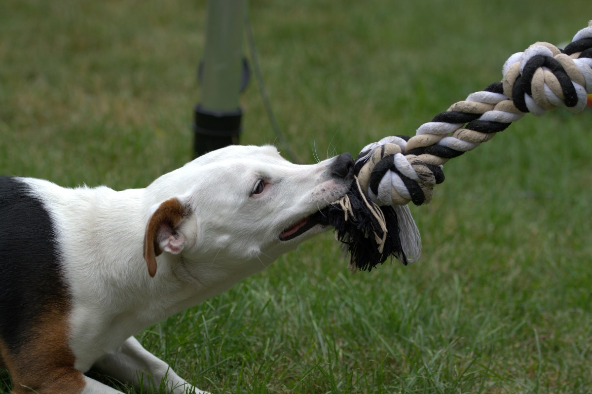 Use intermediary tools like tug ropes to redirect your nippy dog.
