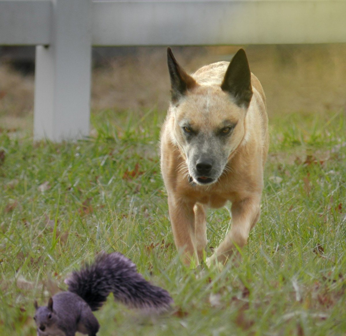 Are there critters in your yard?