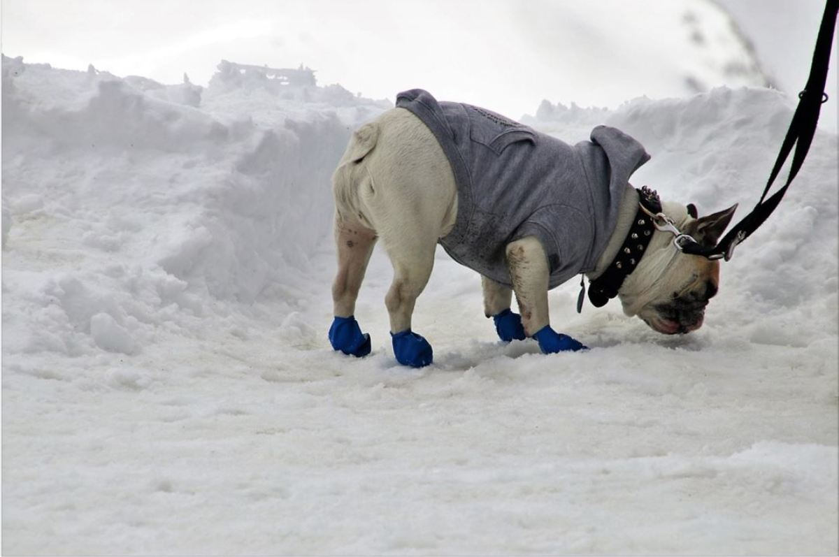 If the place where your dog has been peeing has been covered with a blanket of snow, you are facing an additional challenge.