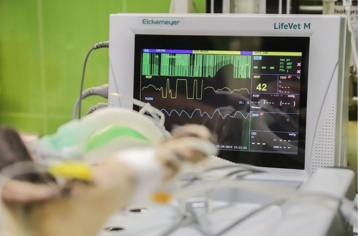 Anesthesia-free dental cleanings using sedation are likely to lack vital monitoring equipment.