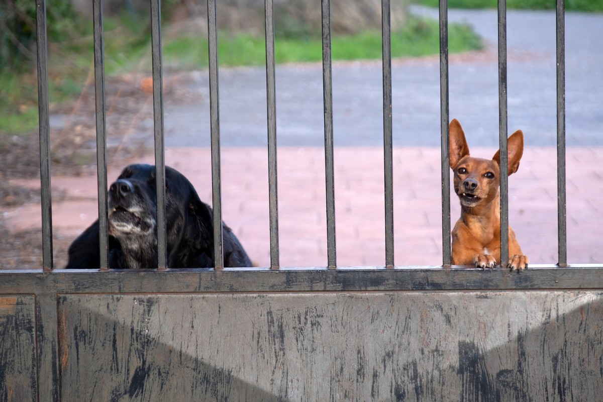 Repeated exposure to triggers behind fences get dogs riled up.