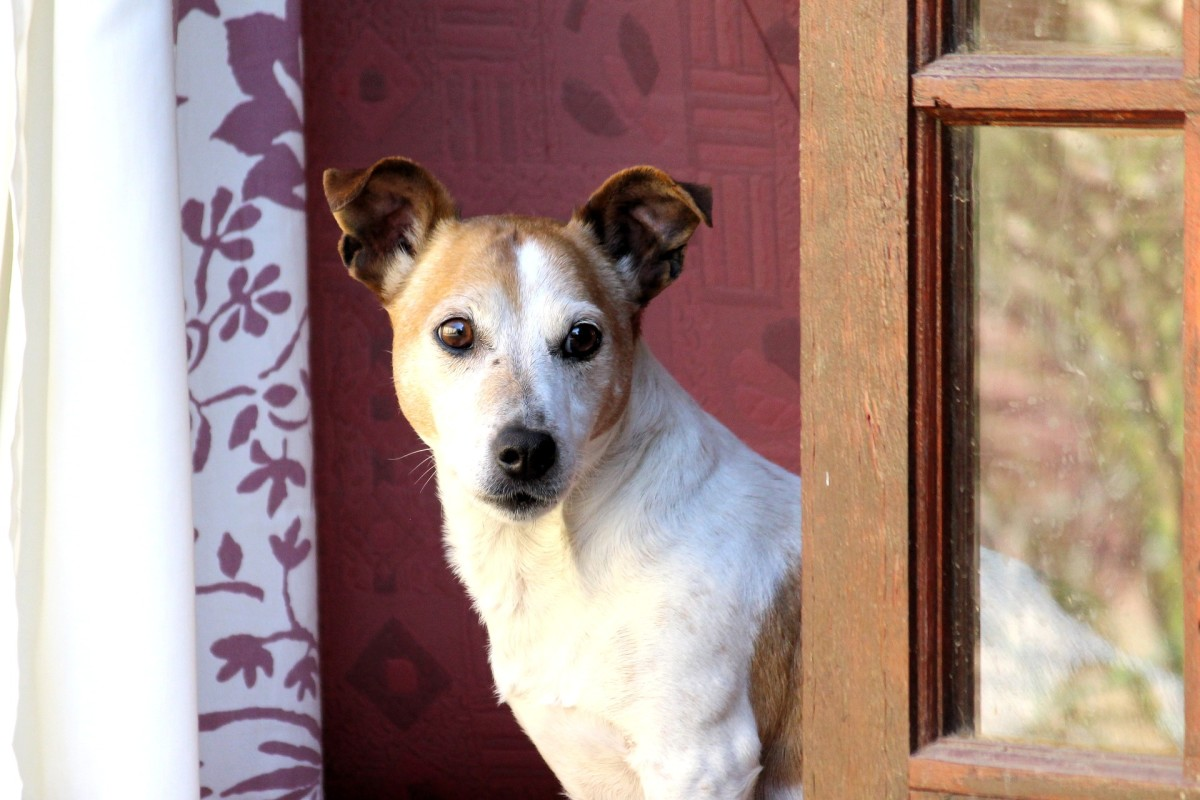 Separation anxiety is the second most common reason dogs are surrendered.