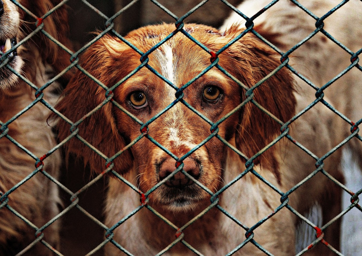 Being surrendered is a very anxiety-provoking situation for dogs.