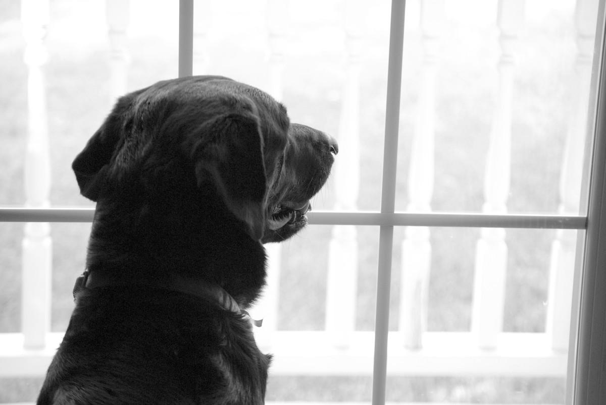 Several behavior issues may mimic separation anxiety.
