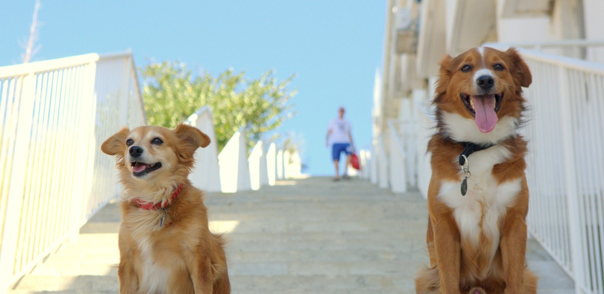 dog-dogs-3615887_1920