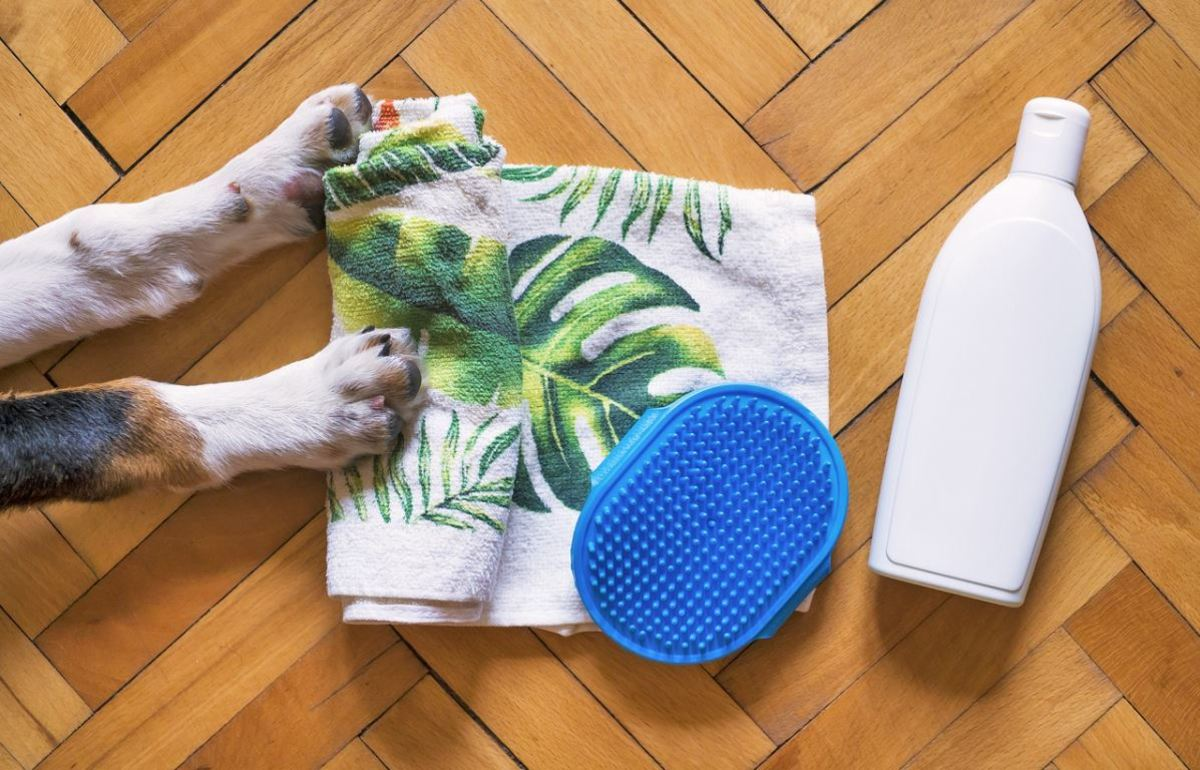 Grooming can help stop your dog from shedding excessively