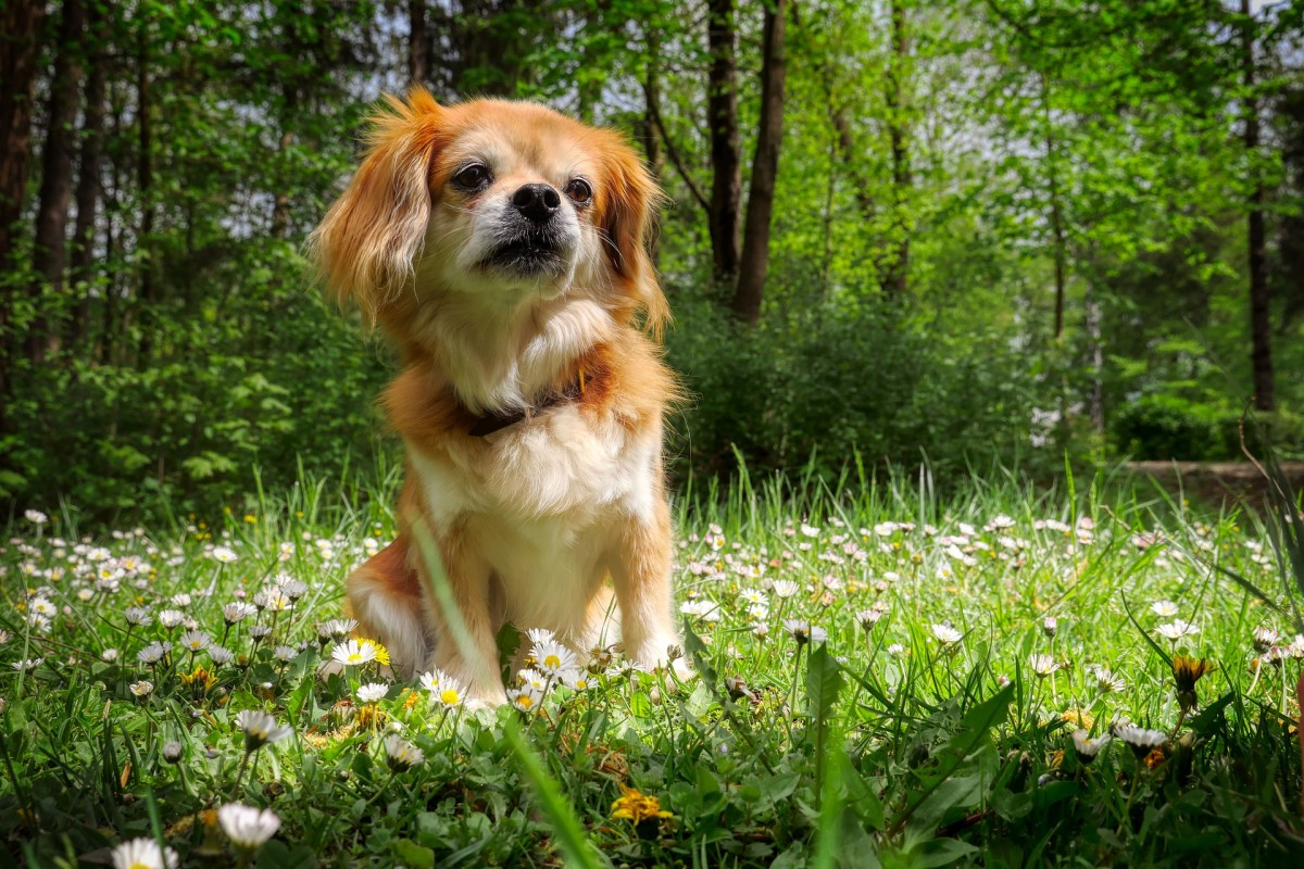 Dogs may develop skin allergies which causes them to have very itchy paws.