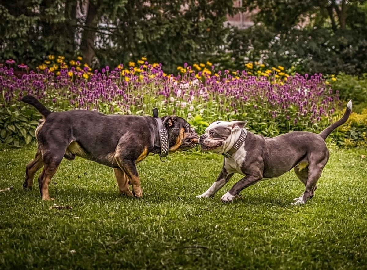 Dogs develop many social and cognitive skills when engaging in play.