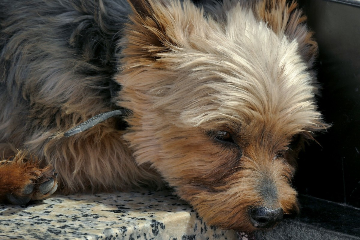 Does your dog sigh when lying down?