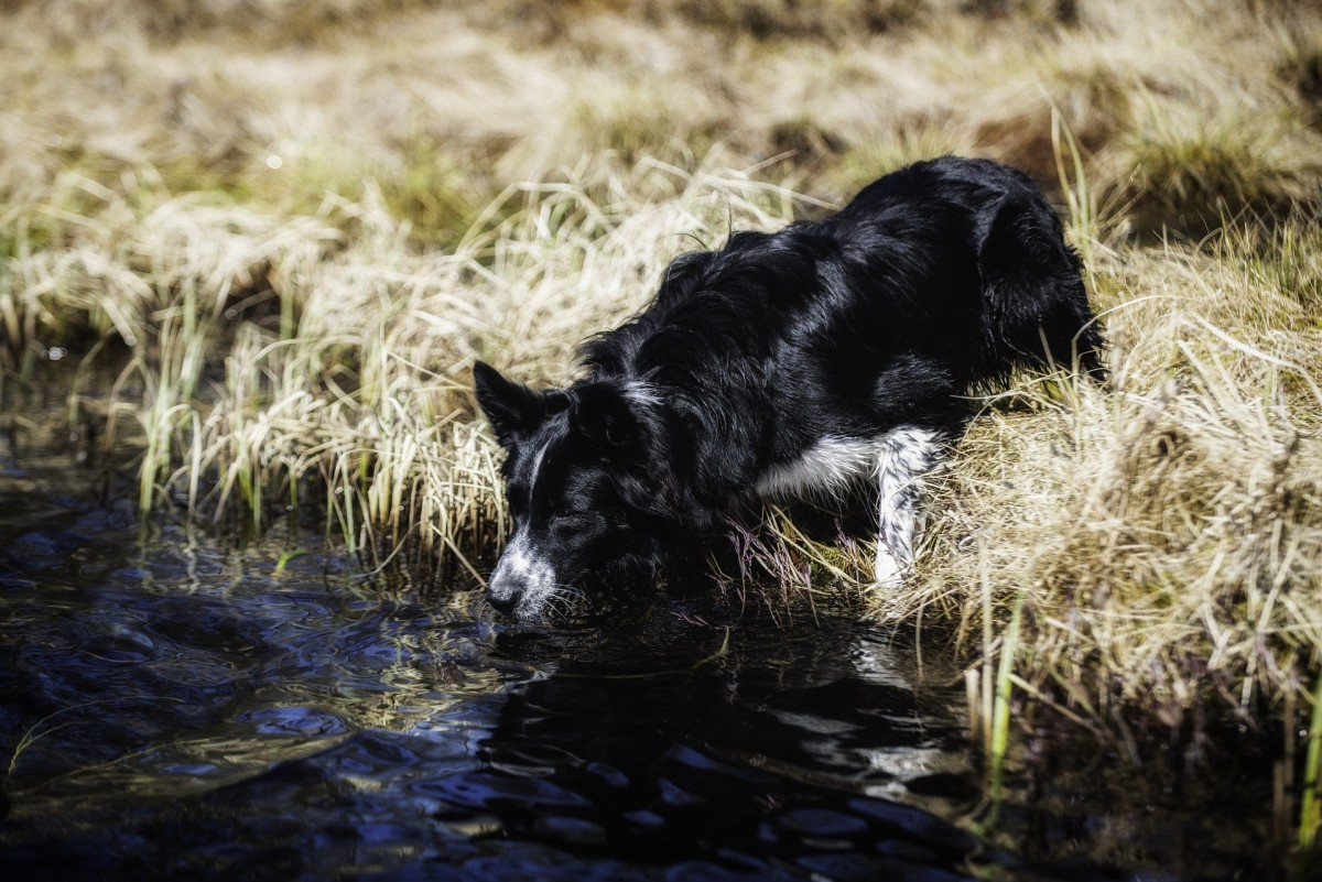 Dogs are drawn to frogs due to their unpredictable movements.