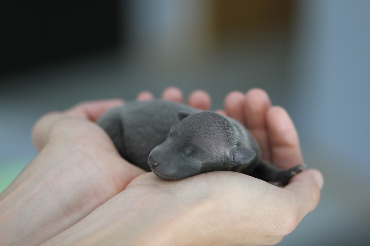 Every puppy has its own placenta when born.