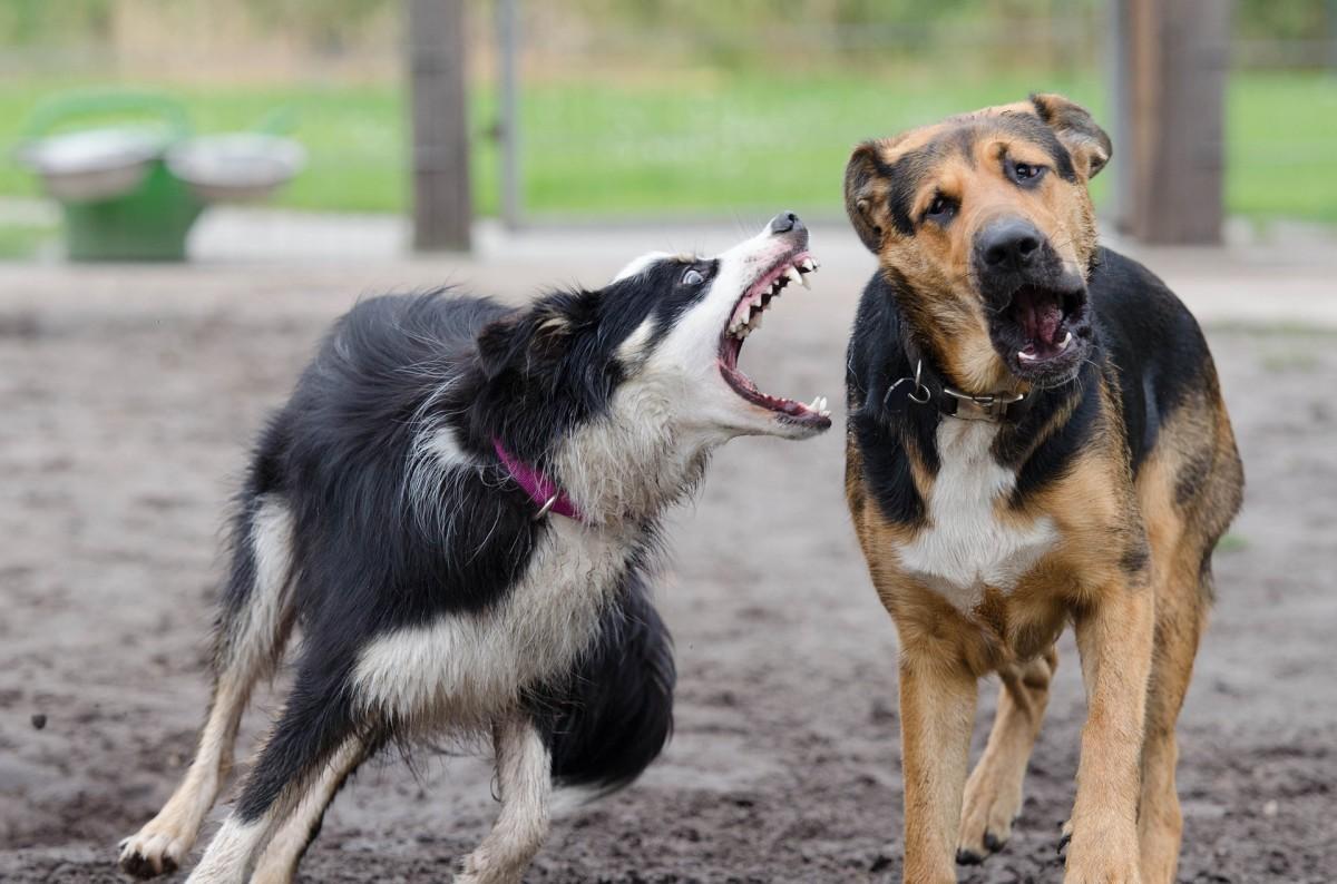 Rude dog behaviors may warrant a snarl or snap.