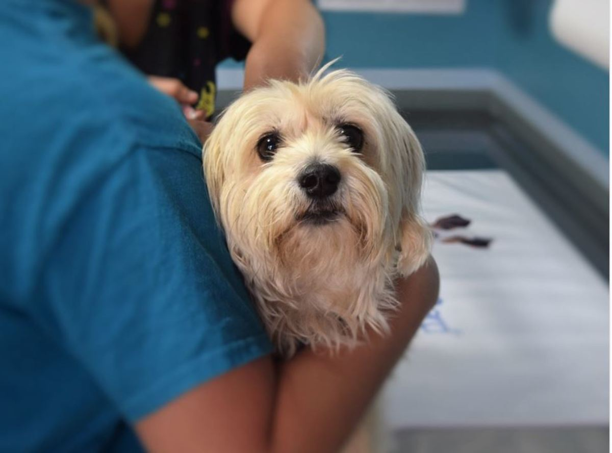 Your vet will run several tests to determine why your dog is leaking urine.