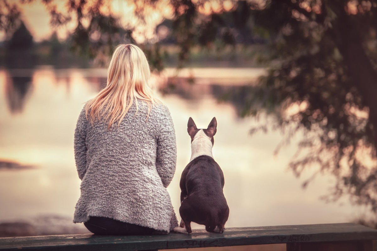 While dogs can detect sounds better and farther than humans, there is often some sort of trade off going on.