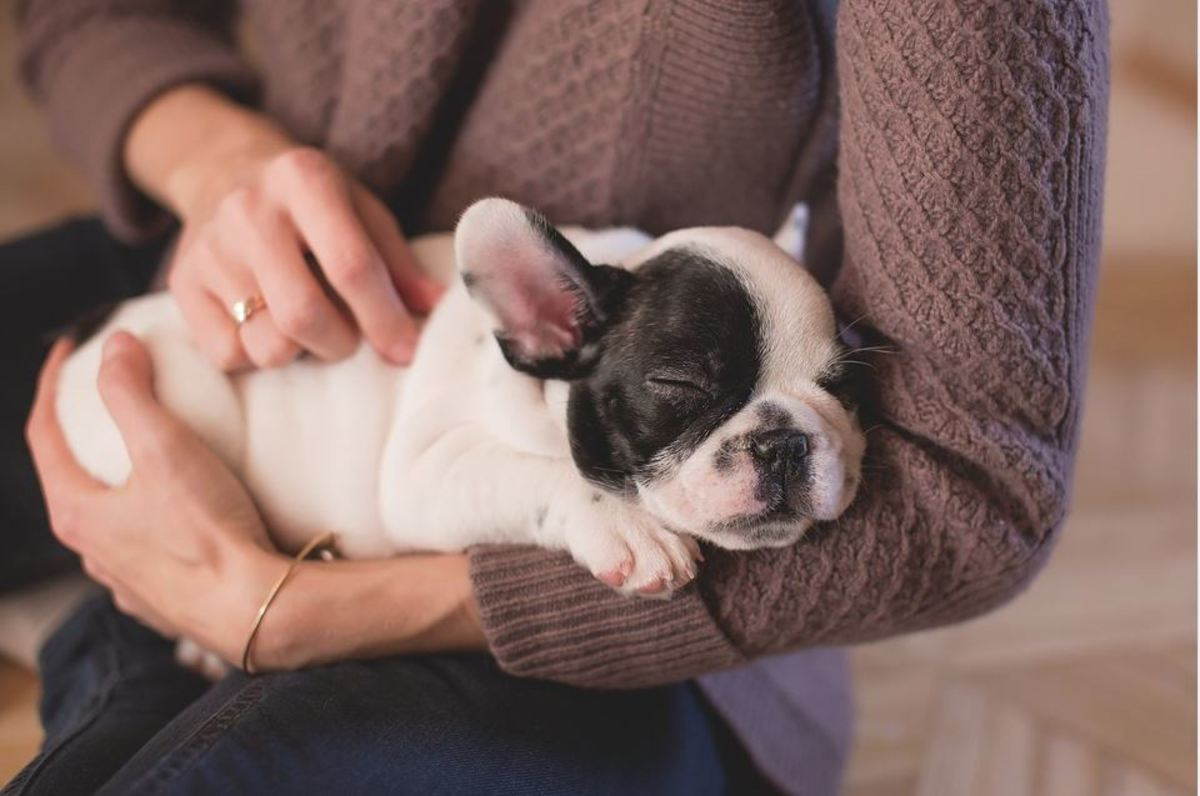 Many dogs relax and even almost fall asleep when their ears are rubbed