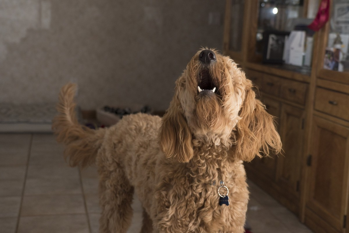 A dog's wagging tail isn't always a sign of friendliness.