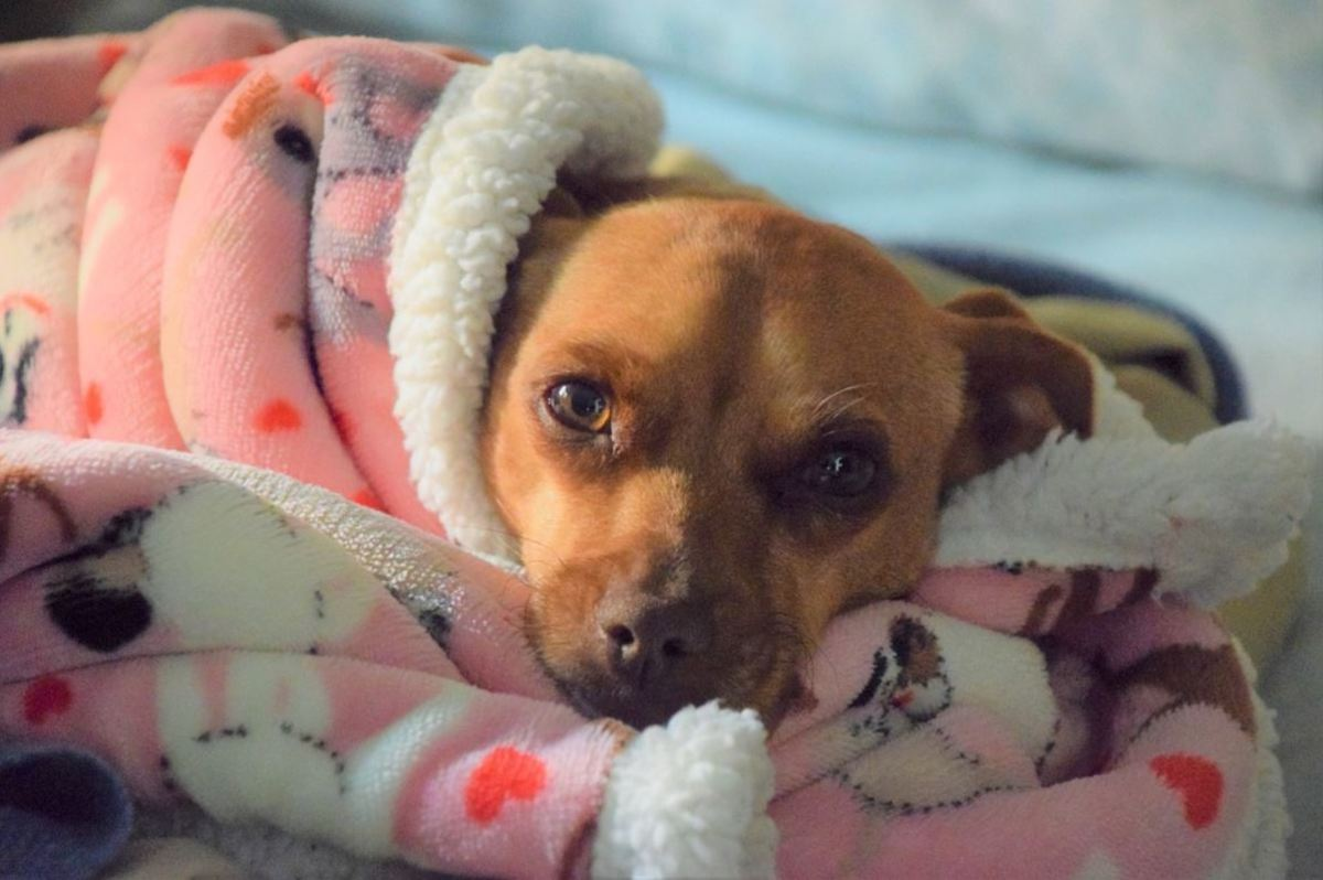 The causes of recurrent urinary tract infections vary among dogs