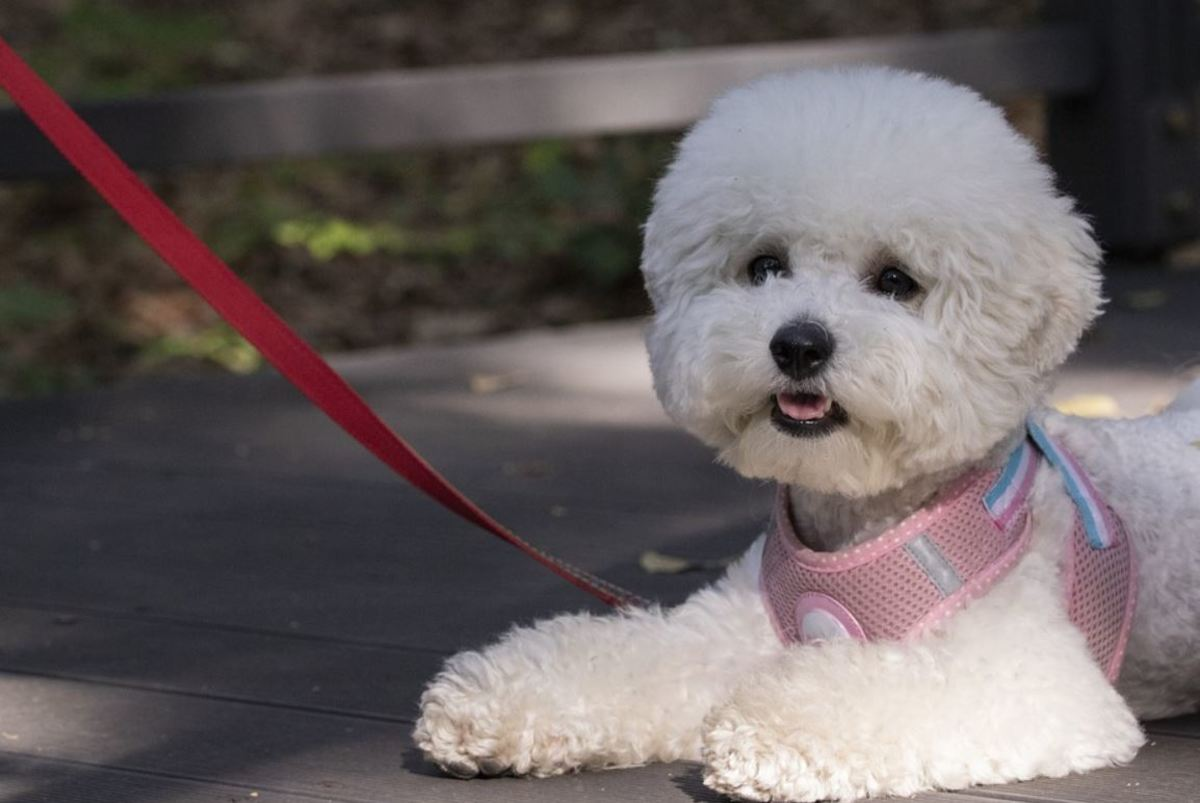 If your puppy stops on walks, ensure the weather isn't too warm