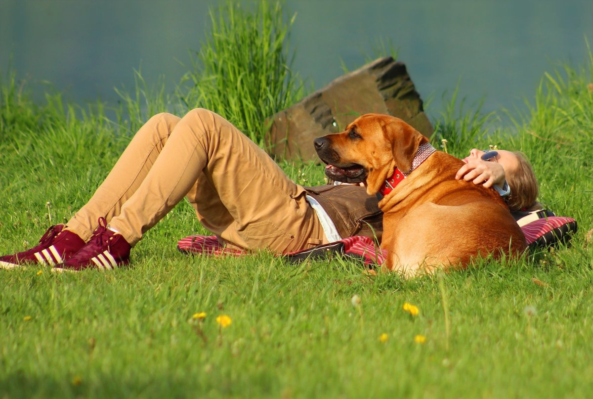 """Dogs may place themselves between the pregnant owner and somebody perceived as an """"intruder""""."""