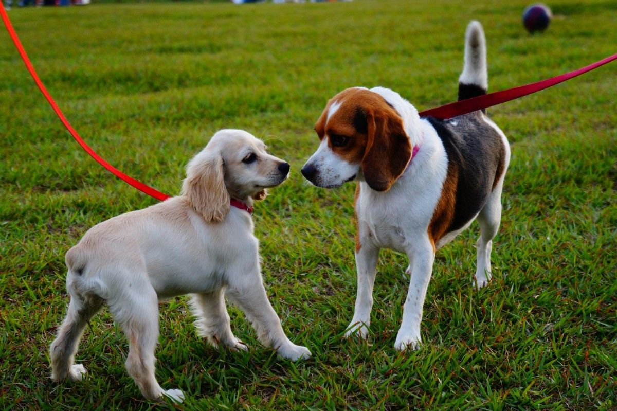 """Head-on encounters on leash may lead to """"incomprehension"""" among dogs."""